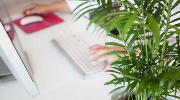 ¿Qué es lo que se necesita para montar una oficina?